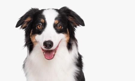 Bild für Kategorie Hund